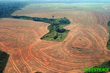 deforestation-novoprogresso